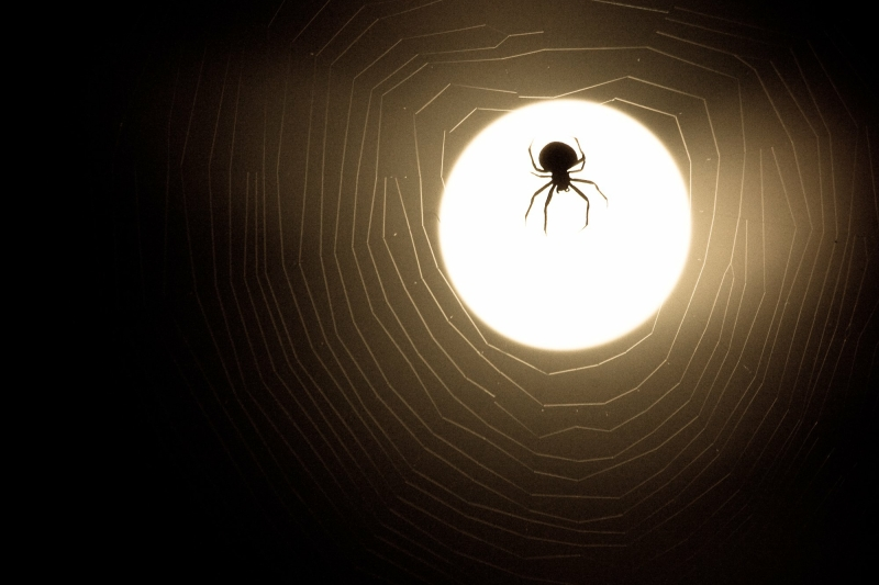 Exterminate Spiders by Contacting Realty Pest in Las Vegas